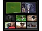 "Country Matters Spaniels Placemats (33cm x 23cm / 13"" x 9"") x 6"