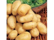 Arran Pilot Seed Potatoes (First Early - 1 kg)