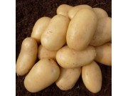 Lady Christl Seed Potatoes (First Early - 1 kg)